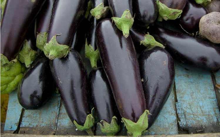 Caties-Organics-Whole-Plant-Foods-Eggplant-Jerky