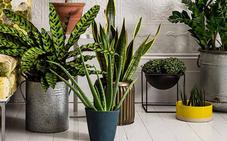 Cures-in-the-kitchen-Purify-Your-Environment-and-Your-Mind-Houseplants
